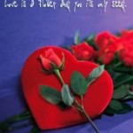 Rose rose4ulove
